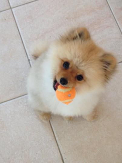 Teddy with Ball