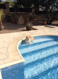 Donut in the pool