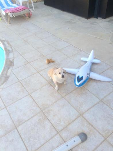 Donut and the plane